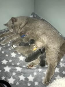 chaira-met-kittens