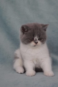 fay-kitten