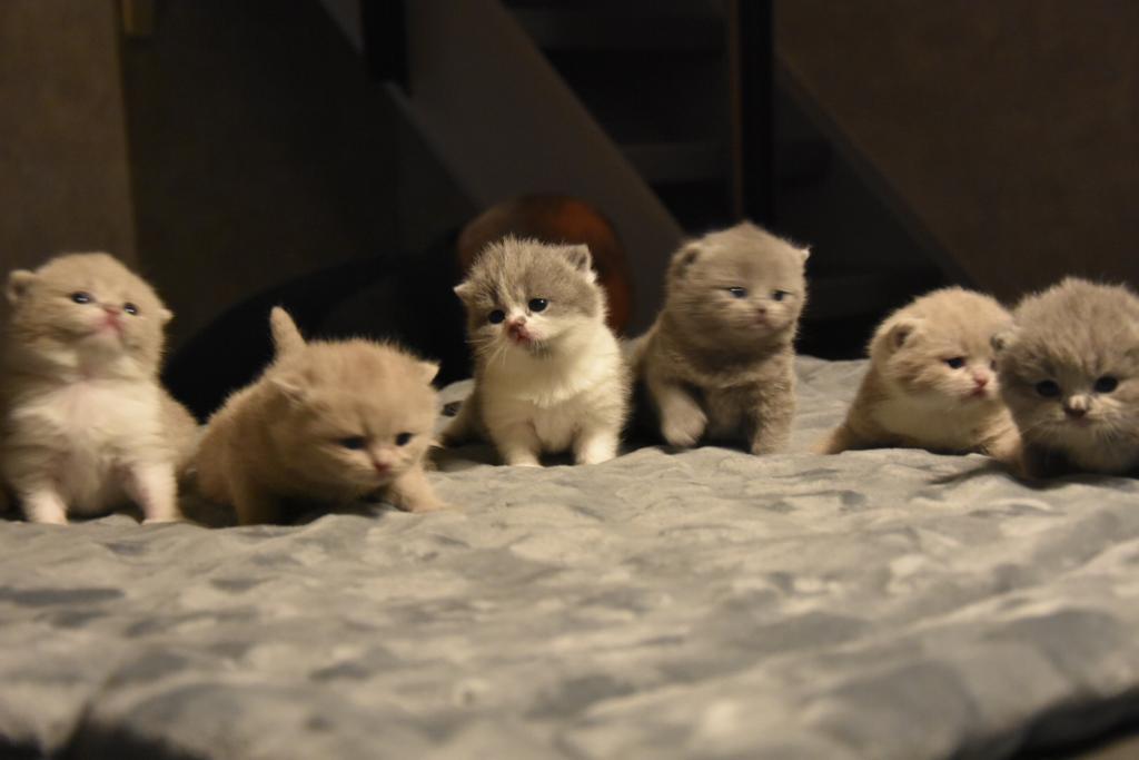 kittens-2-weken-jong-10-11-2018