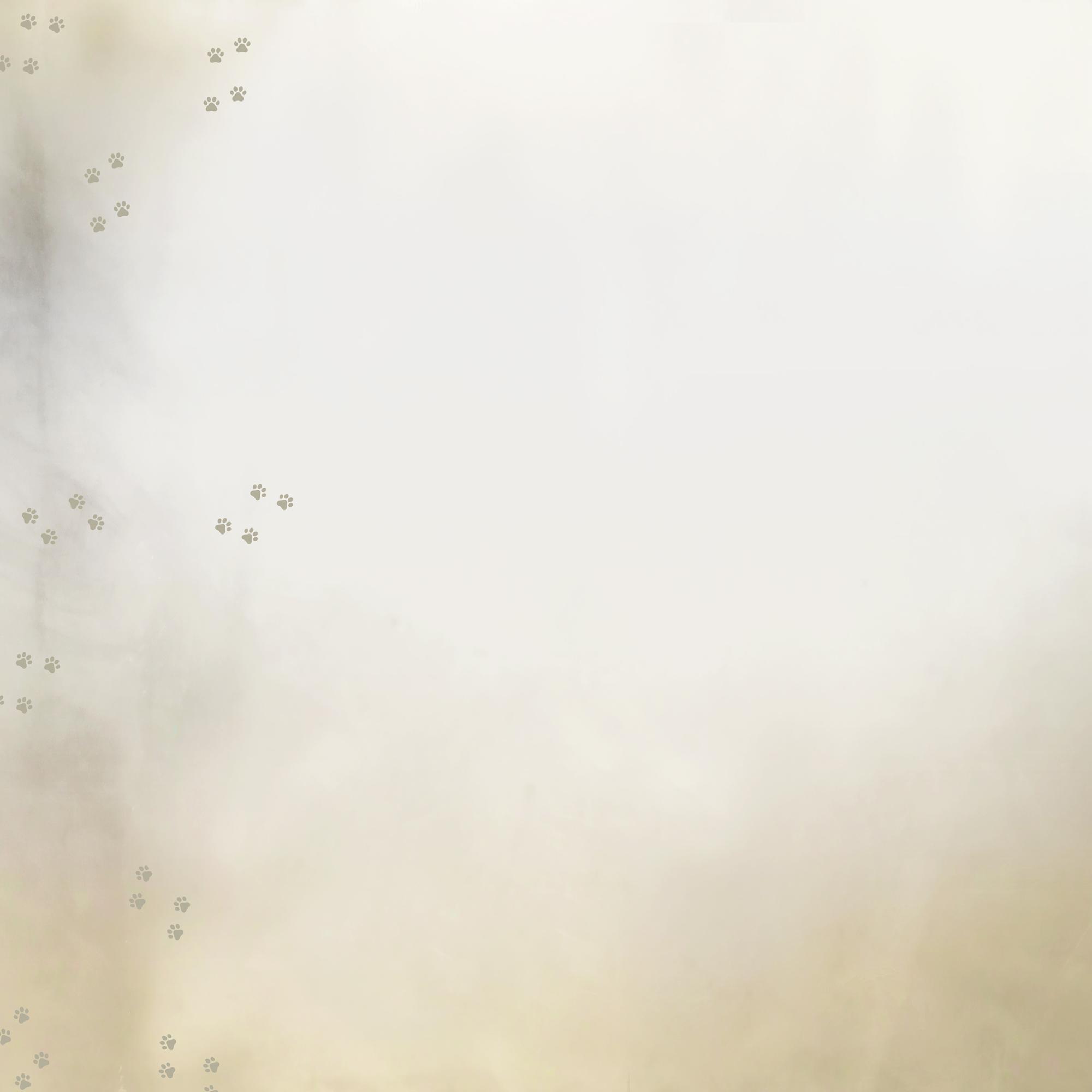 bg_cattery01