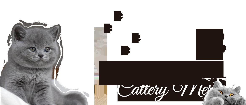 Cattery Merenga